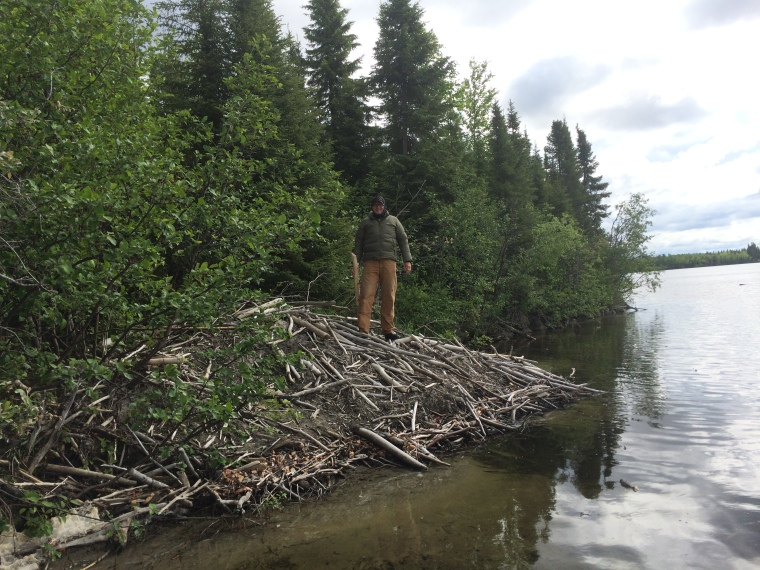 We are easily distracted from fishing by awesome things. Like giant beaver lodges!
